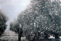 Mr. Ben Tripp with son in front of orchard trees on Hellman Ranch