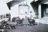 The Gribble boys with pet goats on the front lawn of their home in 1919 or 1920